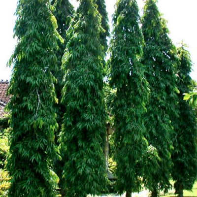 Trees Name In Hindi And English